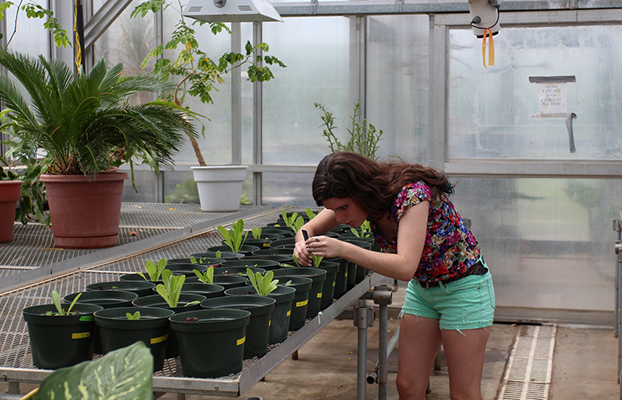 a student tending to a human-made garden surrounded by potted plants.