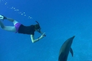 swimming-with-dolphin