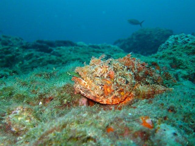 seafloor photo by NOAA on Unsplash