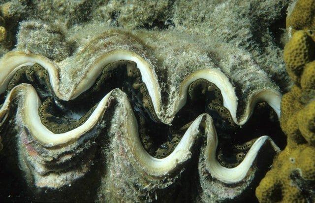 oyster photo by NOAA on Unsplash