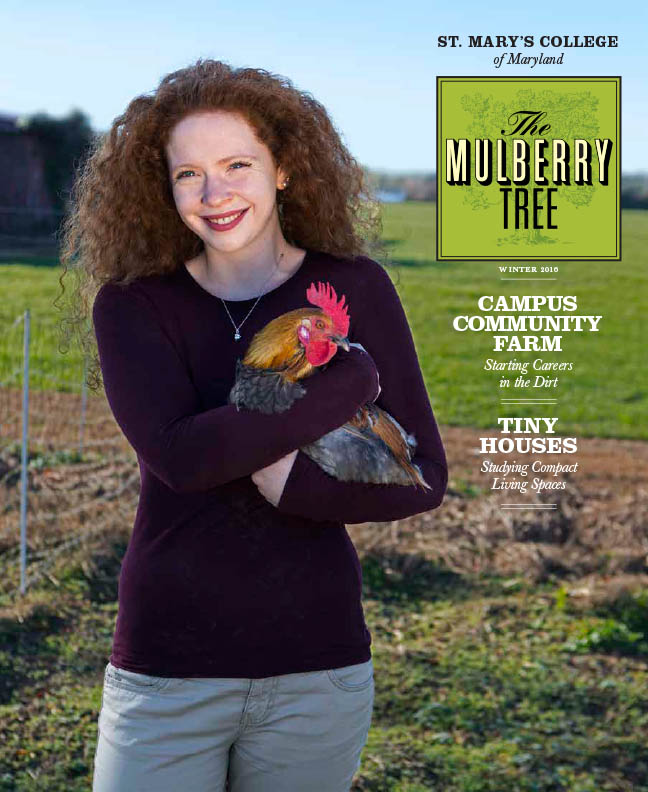 mulberry-tree-cover