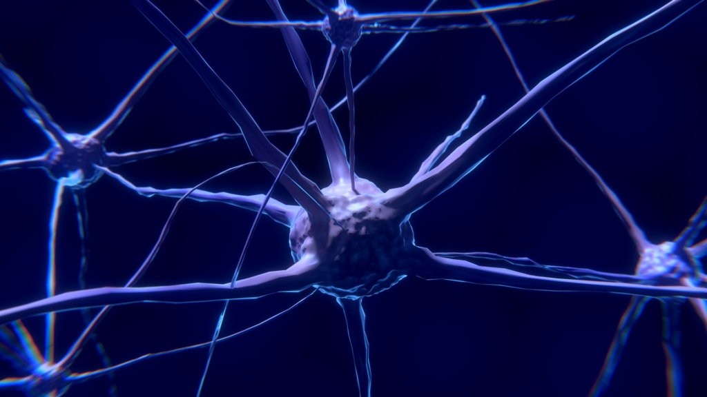 3D graphic visualization of a neuron