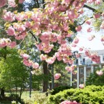 Arbor Day Foundation Honors St. Mary's College with 2013 Tree Campus USA® Recognition