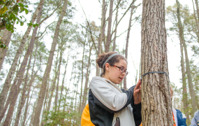 Student measuring the diameter of a tree