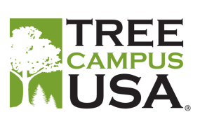 Arbor Day Foundation honors St. Mary's College with 2015 Tree Campus USA® recognition