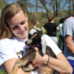 Goats tackle invasive kudzu on campus