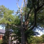 St. Mary's College Tree Management