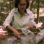 Julie King sorting samples in the field