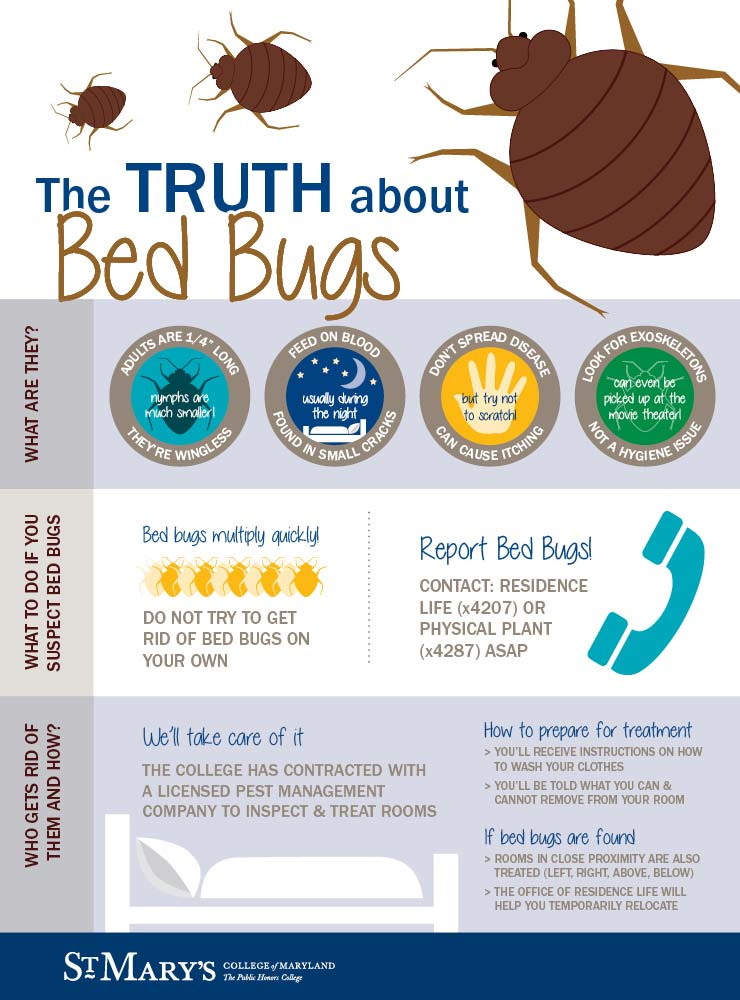 A Bed Bug Information Graphic With Details About What They Are And What To  Do.