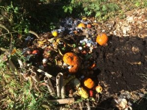 pile of rotten vegetables, pumpkins, and coffee grinds for compost