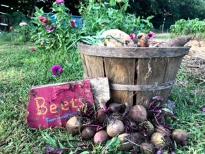 Bucket of beets