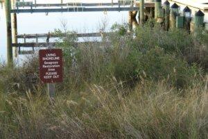 living shoreline at the river center