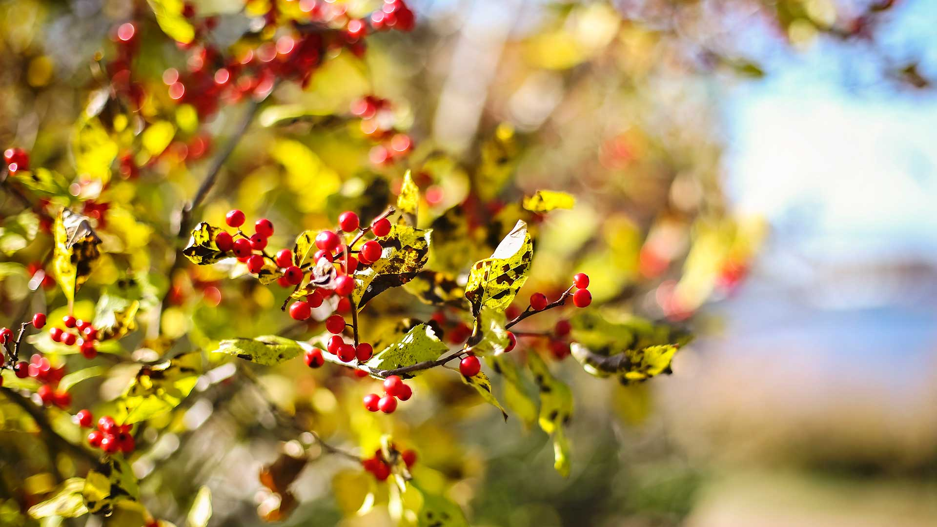 smcm-abstract-leaves-berries-river