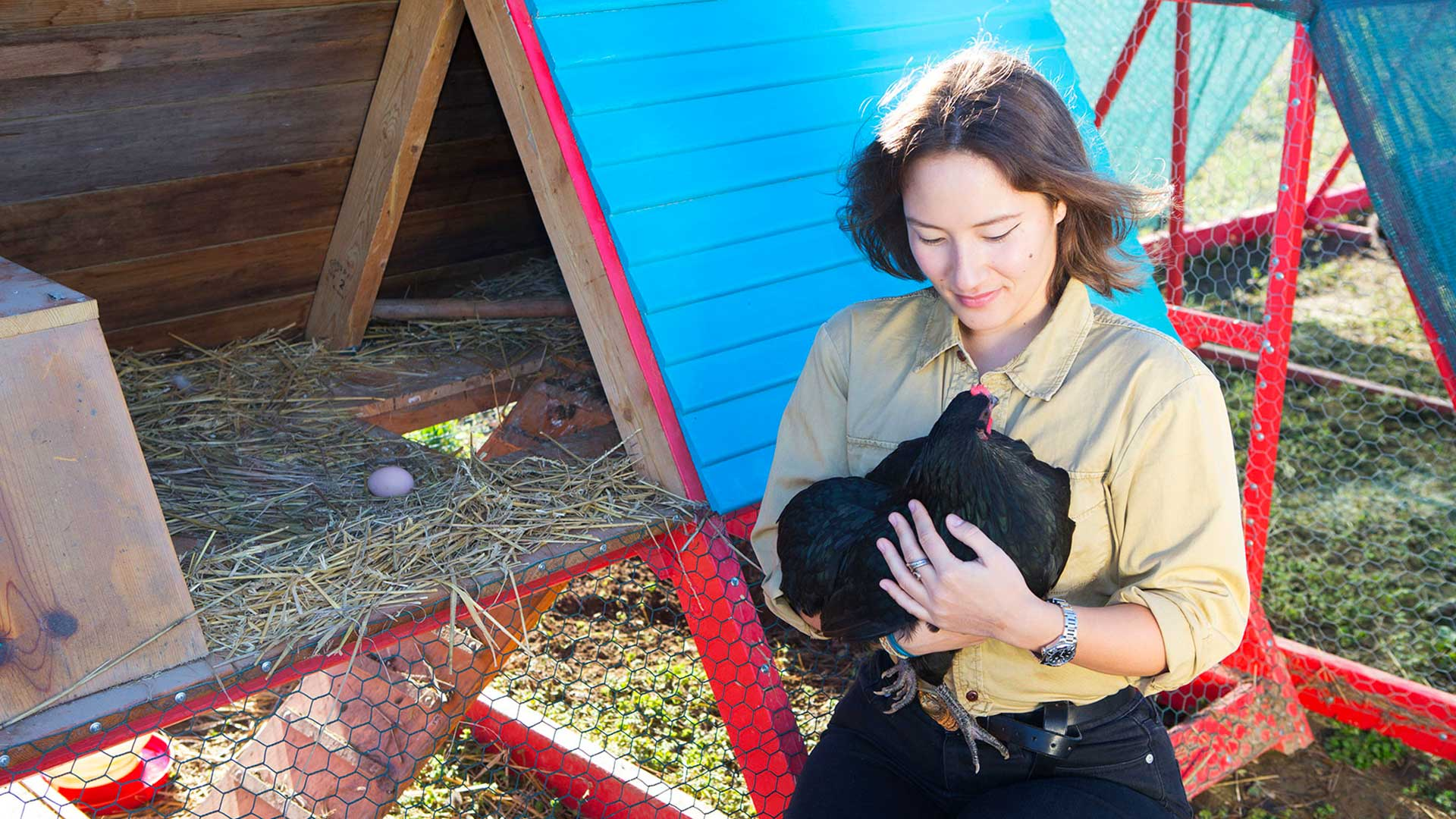 smcm-science-sustainability-chicken-farm