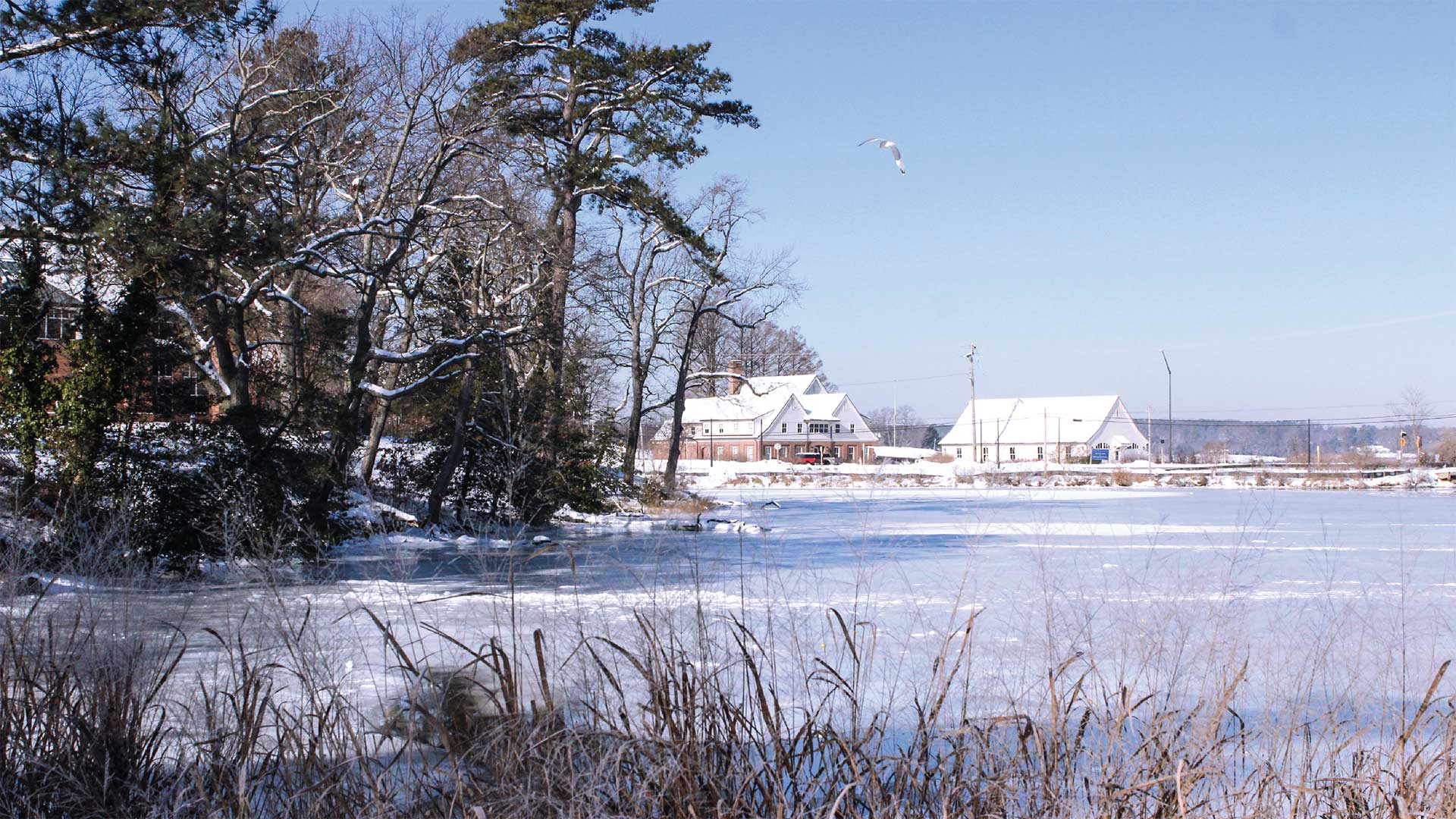 snowy campus view over the St. James pond